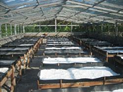 完全天日干し海塩 Laut Baliの作り方